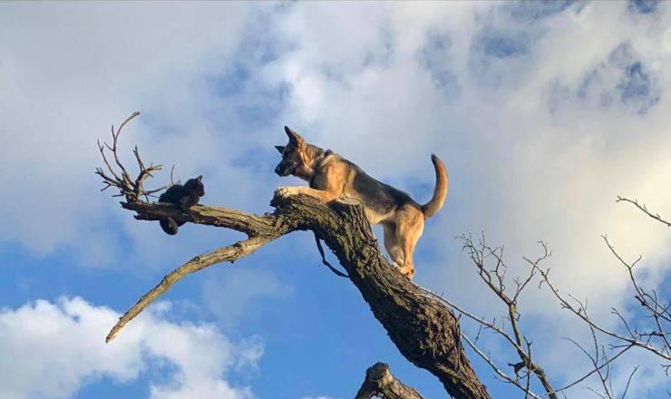 I due sfidanti sull'albero (Foto Facebook)