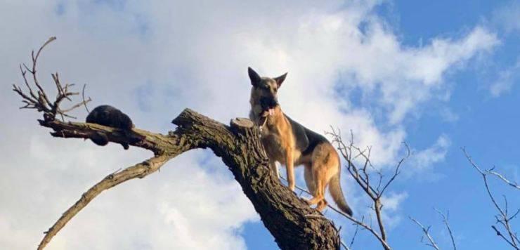 Animali litigiosi sull'albero (Foto Facebook)