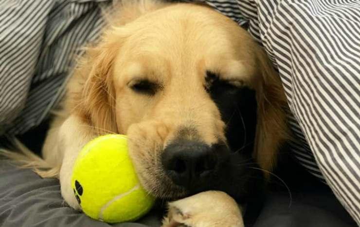 Il cane e la pallina da gioco (Foto Instagram)