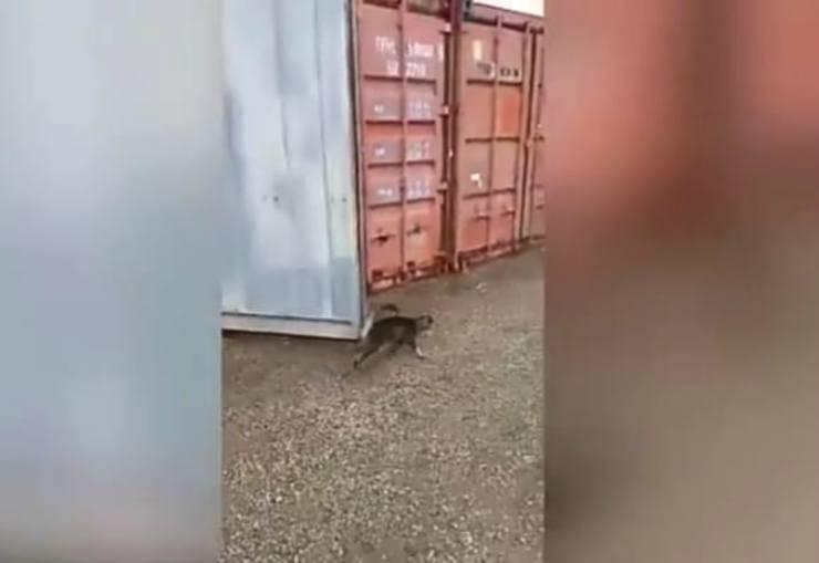 Il gattino liberato (Foto video)