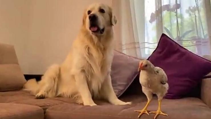 Attenzione e premura del cane (Foto video)