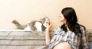 gatto donna incinta