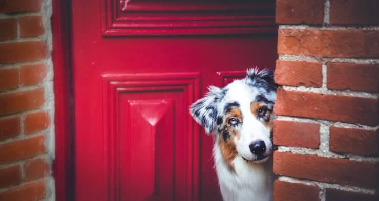 Il cane abbaia quando esci