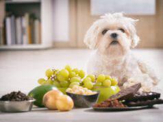 Frutti velenosi per il cane (Foto Adobe Stock)
