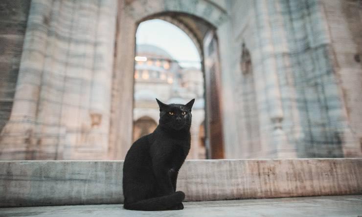 Gatto davanti ad una moschea