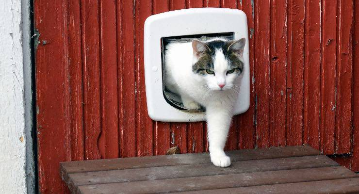Gatto che attraversa una gattaiola