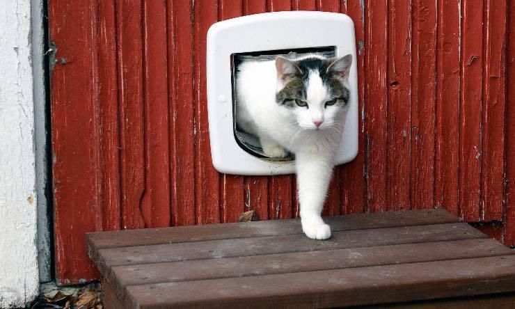 Gatto che passa attraverso una gattaiola