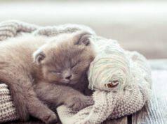 Gatti più freddolosi