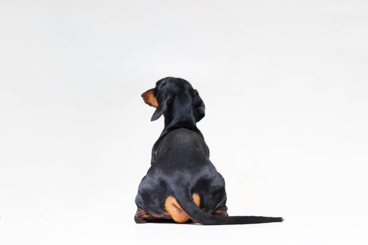 Il cane si siede di fronte