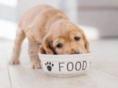 Cane che mangia dalla sua ciotola