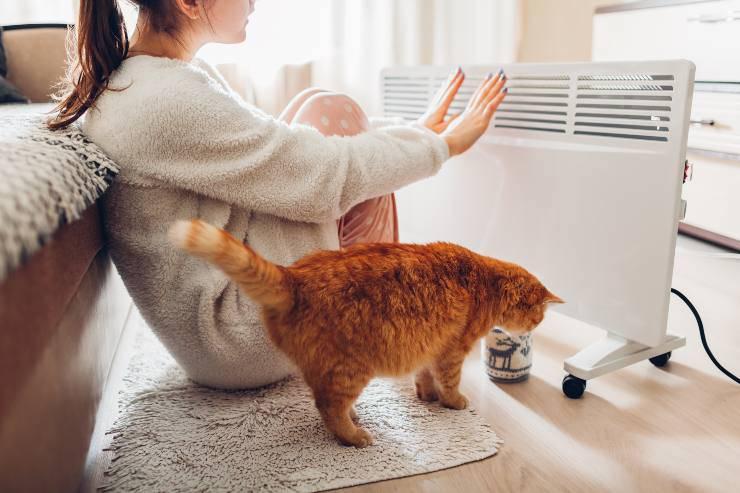 Gatto e stufa