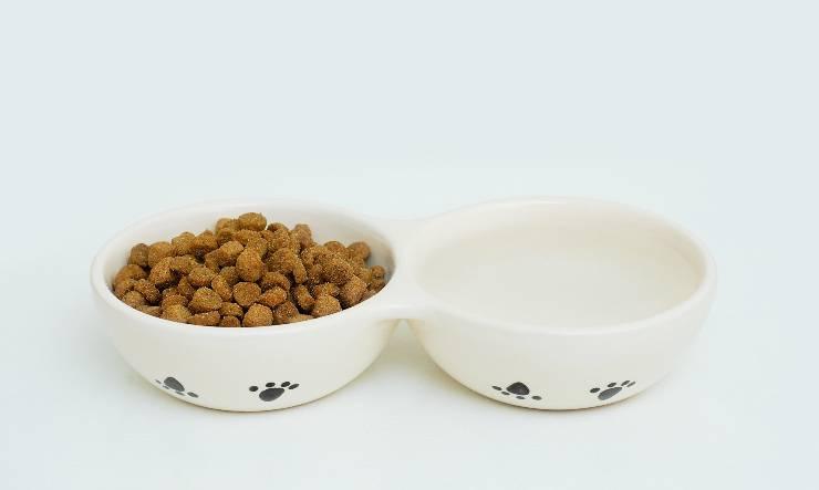 ciotola per cani in ceramica