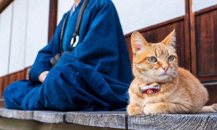 Gatto con monaco