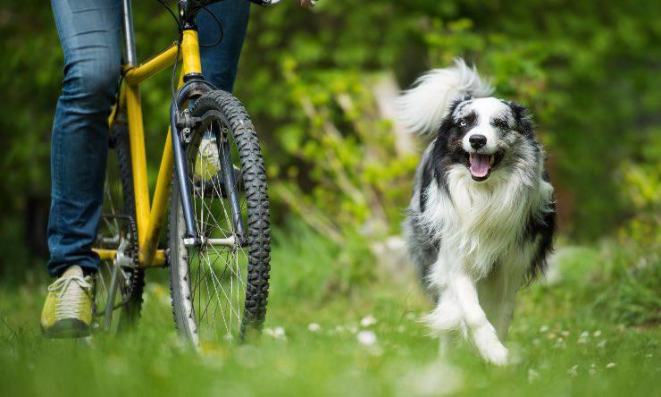 Cane corre con il padrone in bicicletta