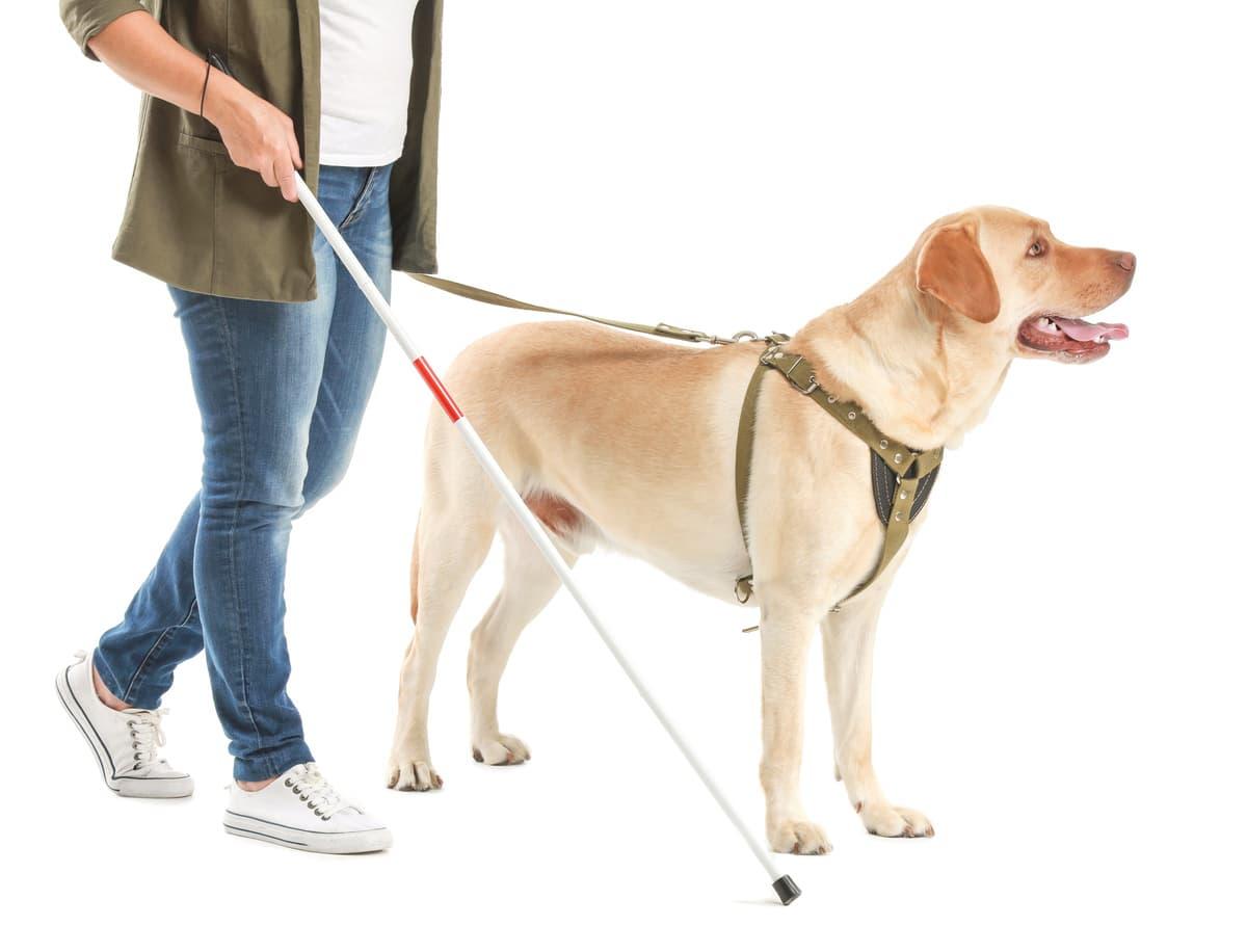 Cane guida per ciechi (Foto Adobe Stock)