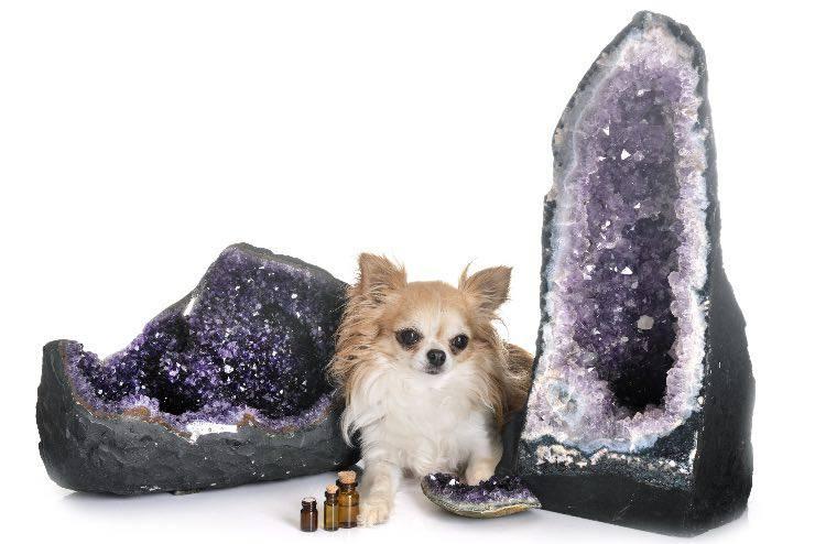 Cane con cristalli