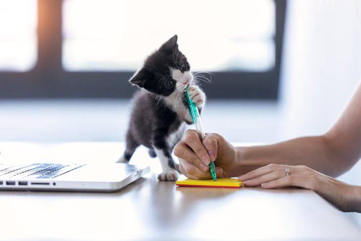 Educare un gattino che morde