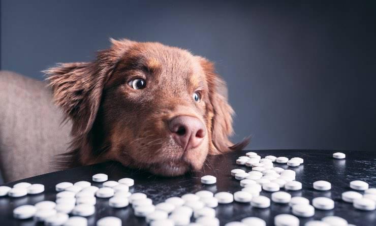 cane con pillole