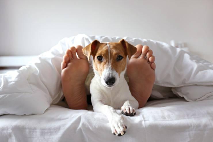 Il cane dorme sui nostri piedi