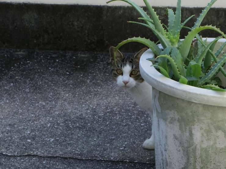 Gatto dietro pianta