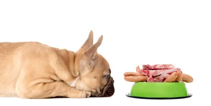 Cibi grassi per il cane