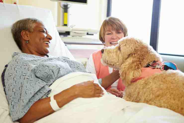 I vantaggi della pet therapy (Foto Adobestock)
