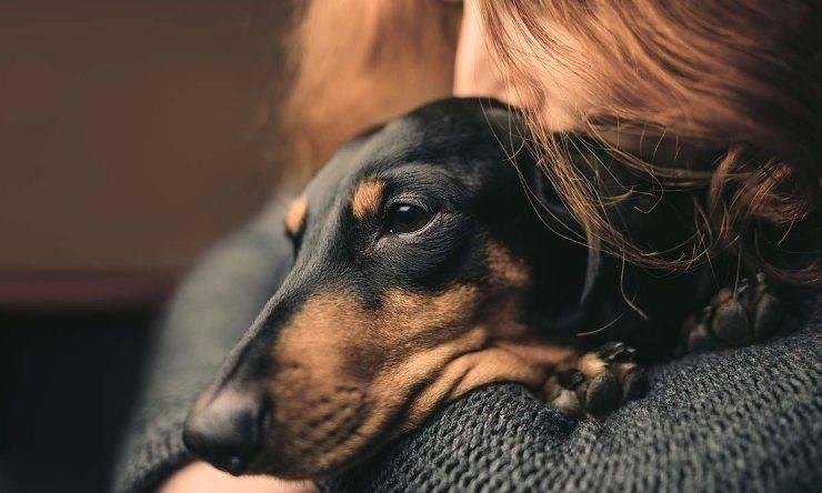 Cane capisce il nostro stato d'animo