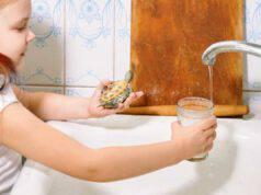 Come pulire il guscio della tartaruga d acqua