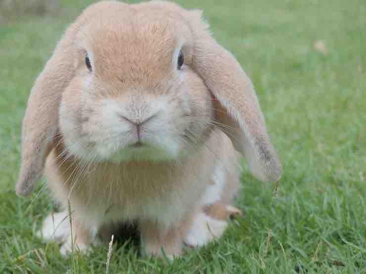 cattivo odore coniglio