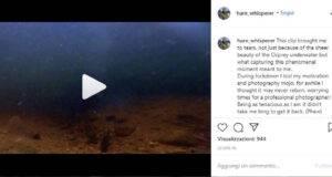 falco pesca trota