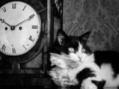 gatto notte