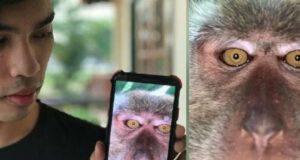 selfie e video di scimmie