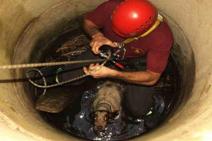Un cane di razza Breton è caduto in un pozzo profondo quattro metri (foto Facebook)