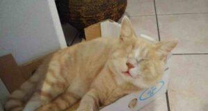 Sushi, il gatto cieco abbandonato in un sacchetto di plastica (Foto Facebook)