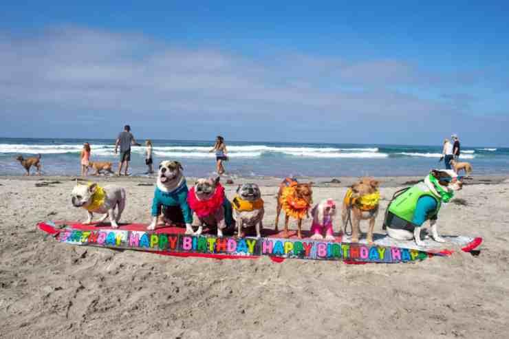 Surf Dog Surf-A-Thon, il concorso dei cani che fanno surf (foto Facebook)