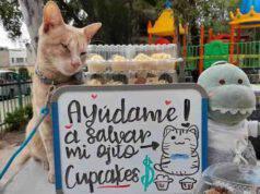 Antonio, il gatto che vende cupcake per salvarsi dalla cecità (foto Facebook)