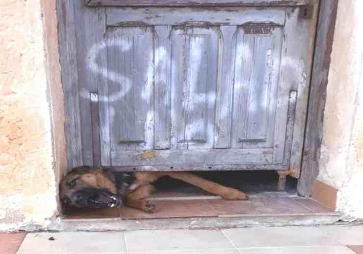 Tre cani maltrattati e legati con catene: multato il proprietario (Foto Facebook)