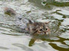 Cucciolo di gatto gettato in acqua con un sasso legato al collo: il salvataggio (foto Facebook)