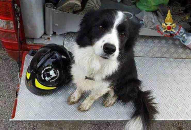 Bosco, il cane caduto in una forra durante una battuta di caccia (foto Facebook)
