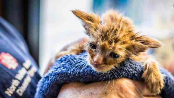 Baby Yoda, il gattino salvato da un incendio in California (foto Facebook)