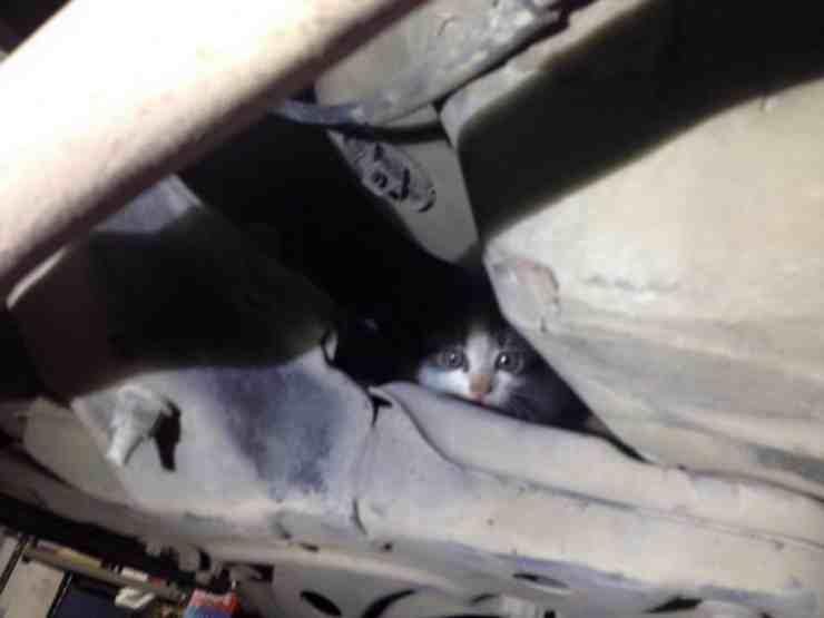 Gattino salvo per miracolo: si era infilato nel vano motore di una macchina (foto Facebook)
