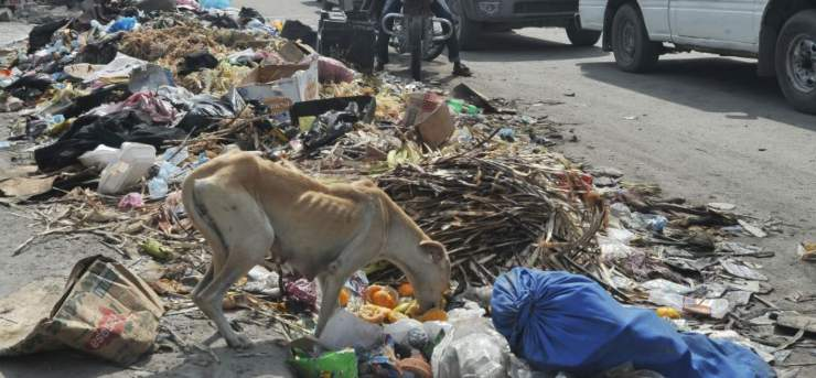 trovato cane tra rifiuti