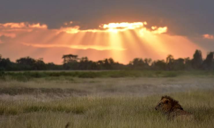 fauna selvatica rischio estinzione