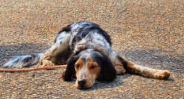 Magenta, cane abbandonato in un parco: trovati i proprietari