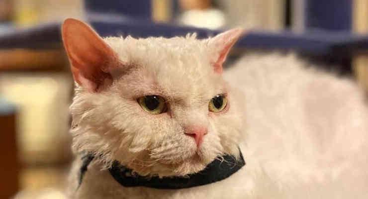 Chirico, la gatta sempre arrabbiata (foto Instagram)