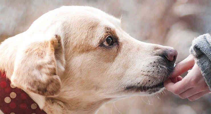 Sadie, cane salvato da UPS (foto Pixabay)