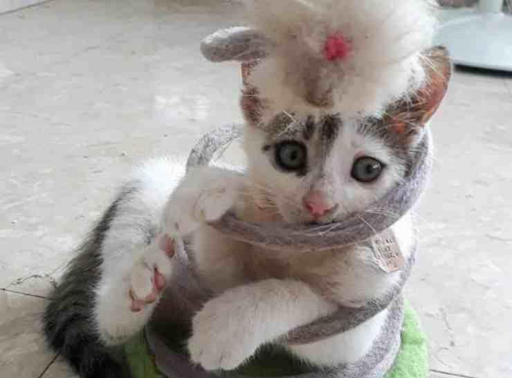 Pnina, la gattina rimasta incastrata nel suo giocattolo (foto Facebook)