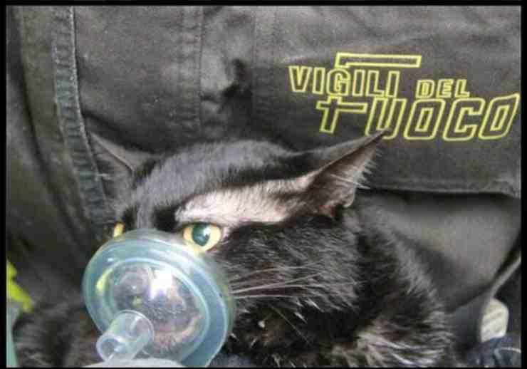 Gattino rischia la vita in un incendio: vigili del fuoco provano a salvarlo (foto Facebook)