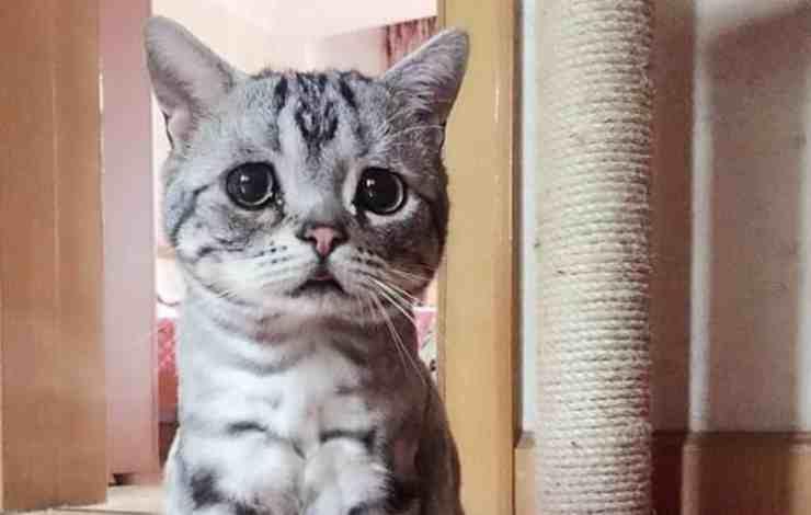 """Gatto riceve lettera minatoria: """"Metterò esche avvelenate"""" (Foto Facebook)"""