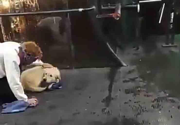 Cane abbandonato per la prima volta conosce l'amore (screenshot Twitter)